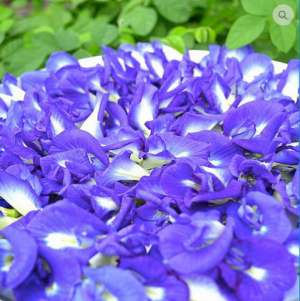 Blue - Butterfly Pea Flowers and Powder